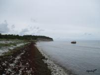 saare5